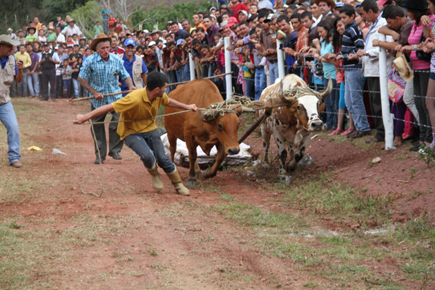 Gobernador de Táchira incorporará en la FISS competencia de yunta de bueyes