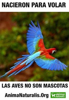 Cuatro detenidos por comercializar fauna silvestre en Caracas