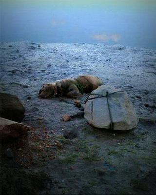 Piden cárcel por atar a un perro a una piedra para que se ahogara
