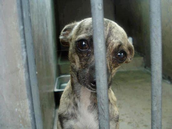 Regulan en Venezuela empleo de animales vivos para experimentos