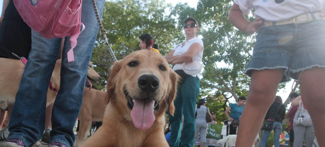 Nueva Ordenanza de Protección Animal de Maracaibo será publicada