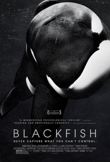 BlackFish finalmente nominada a los BAFTA, ¡gracias a tí!