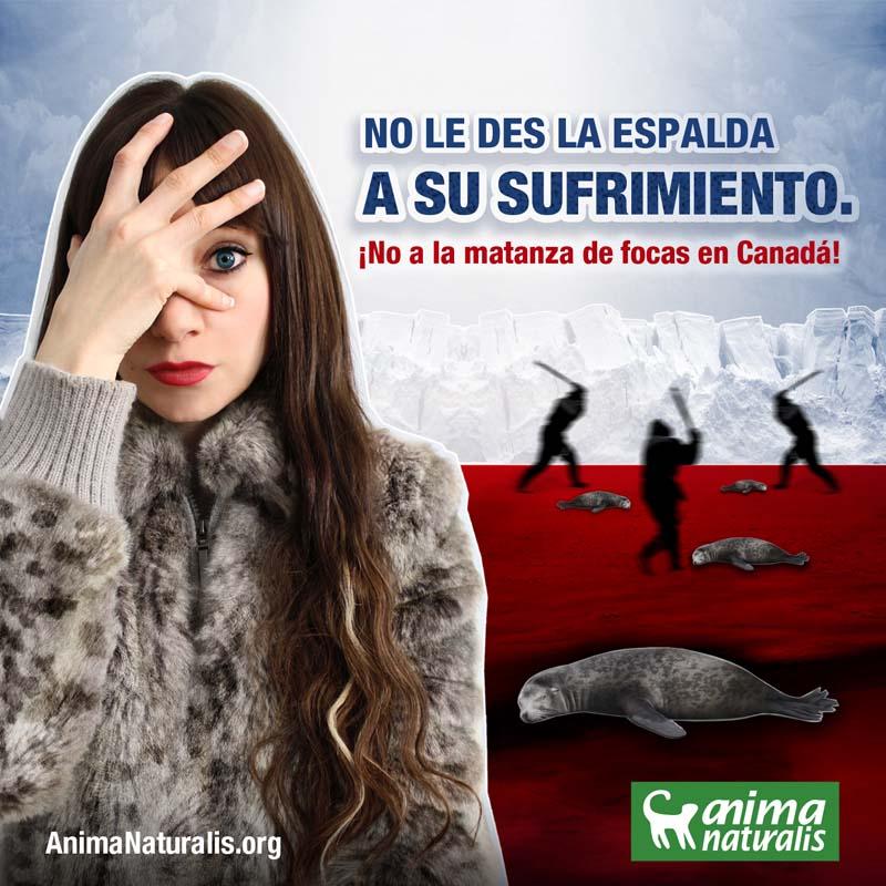 ¡Exijamos NO MÁS tortura y muerte a las focas en Canadá!