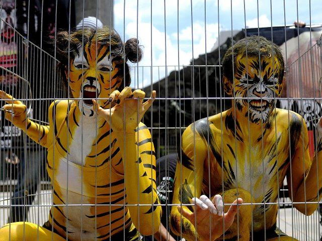Panamá prohíbe la entrada de circos con animales silvestres