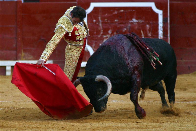 Las Cortes de Aragón rechazan declarar los toros Bien de Interés Cultural