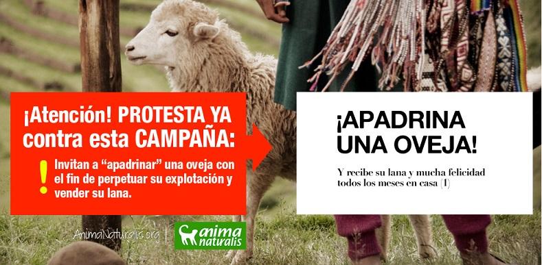 ¡Protesta! ¿Apadrinar una oveja comprando su lana?