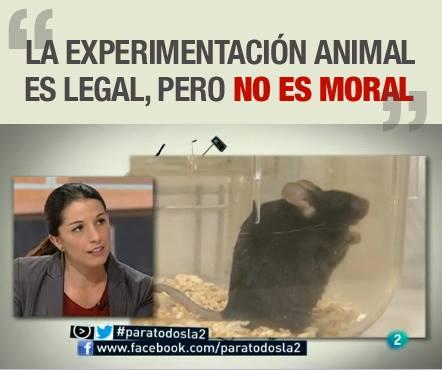 AnimaNaturalis en TV2 para hablar sobre experimentación animal