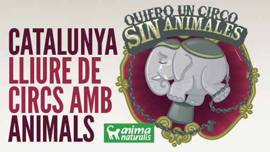 El Parlament cita a 22 expertos sobre el uso de animales en circos