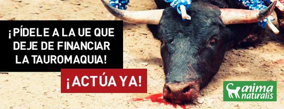AnimaNaturalis lanza SpainIsPain y pide a la UE poner fin a las subvenciones taurinas. ¡Actúa ahora!
