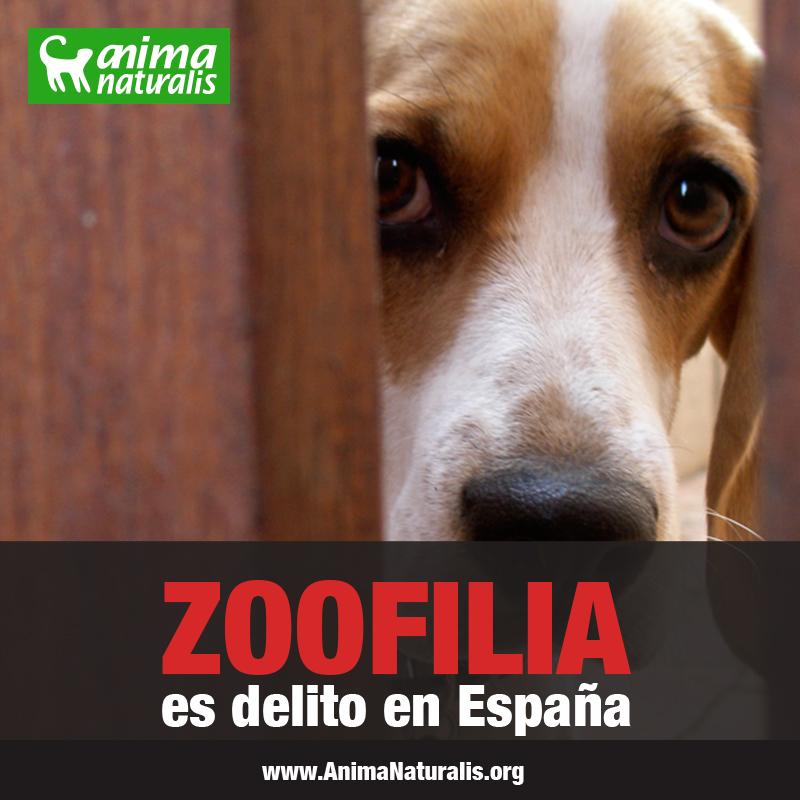 España modifica el Código Penal sobre el maltrato animal