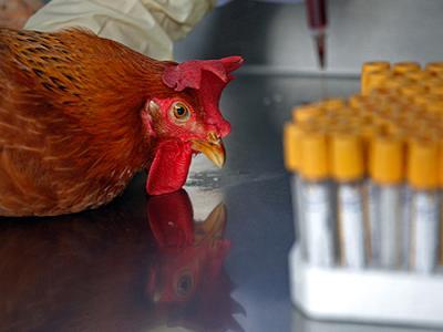 Liceístas tachirenses piden al Ministerio de Educación cesen pruebas con animales