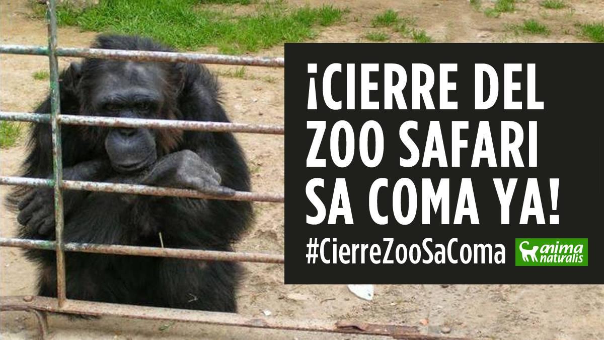 AnimaNaturalis exige medidas urgentes contra el Safari Zoo de sa Coma