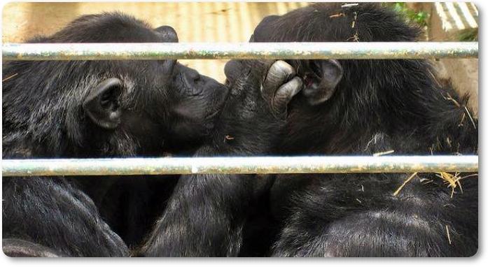 AnimaNaturalis pide el cierre del Zoo Safari y que se investigue la muerte de Adán y Eva