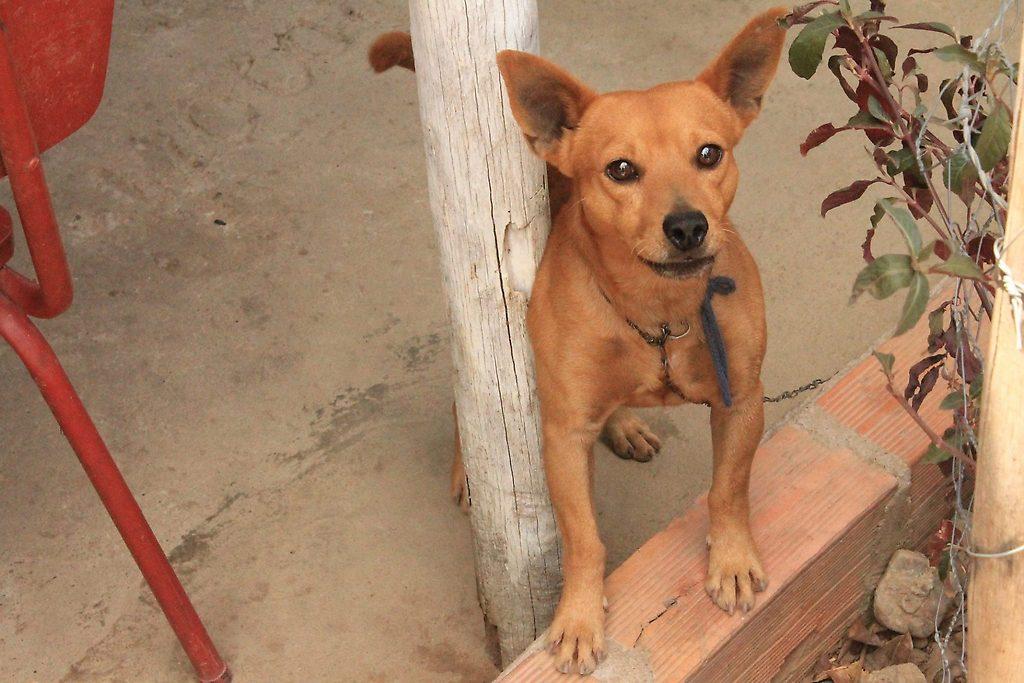 Animales abandonados en la frontera Colombia-Venezuela necesitan ayuda