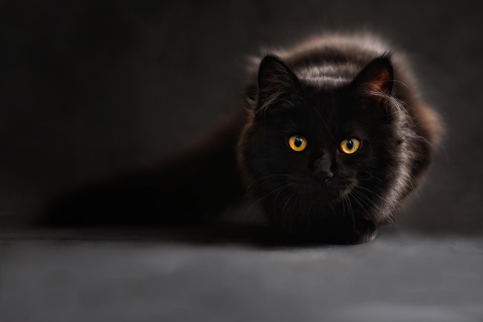 Gatos negros, víctimas de supersticiones y absurdas creencias