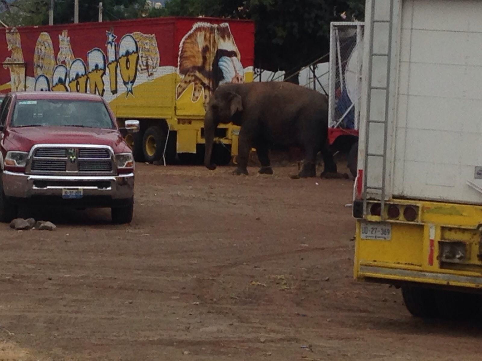 ¡Exige a PROFEPA Michoacán que haga cumplir la ley que prohibe circos con animales!