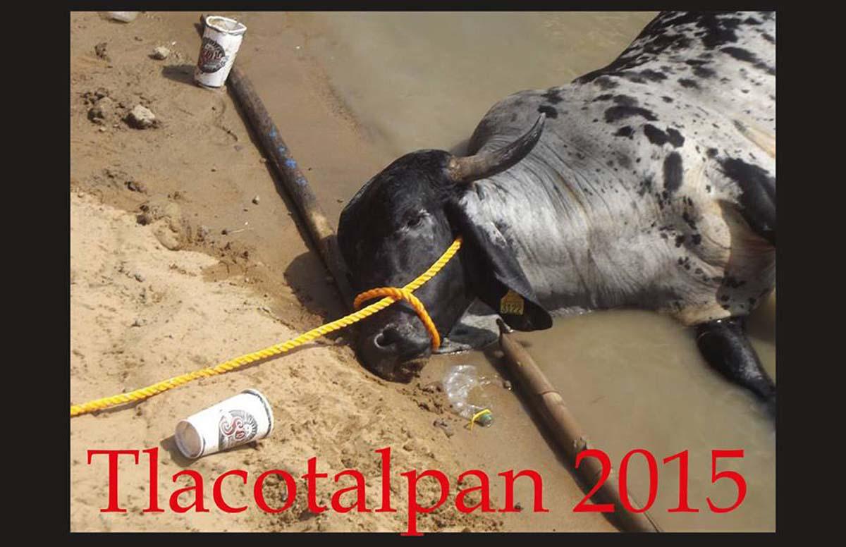 """¡Pidamos al Papa Francisco que se manifieste contra el """"embalse de toros"""" de Tlacotalpan!"""