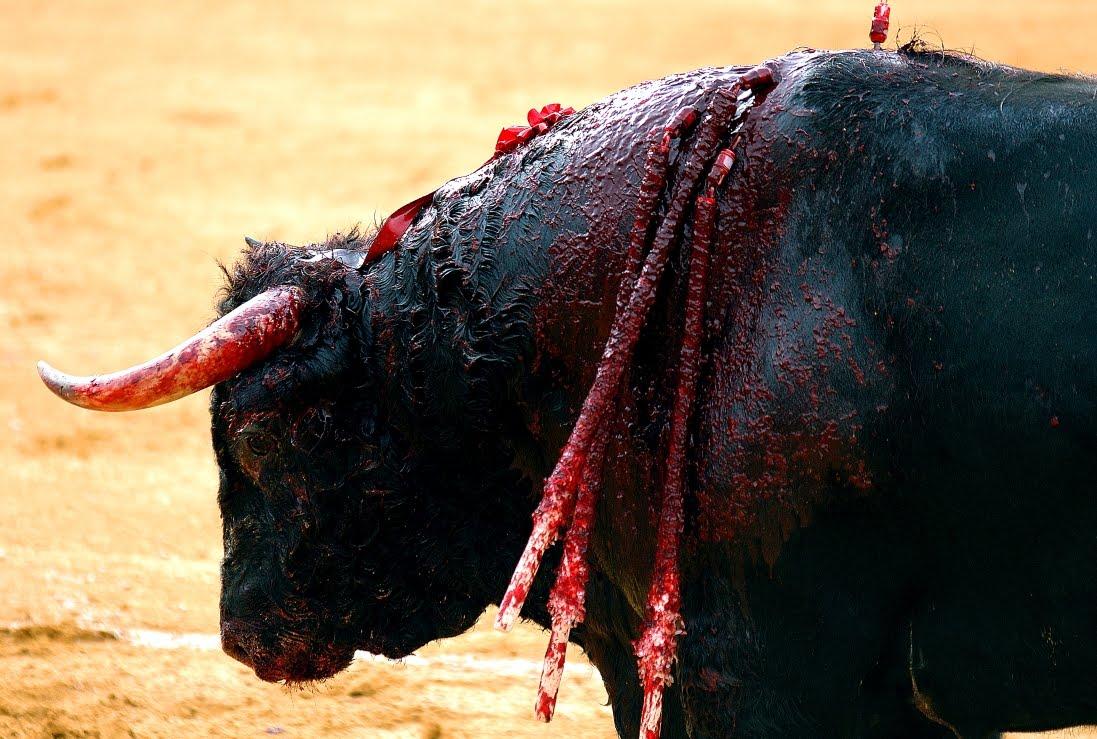 Parlament Balear da el primer paso para prohibir las corridas de toros en las islas