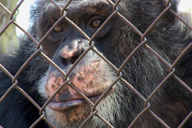 ¿Los animales son personas o son meros objetos que el capitalismo puede salvar?
