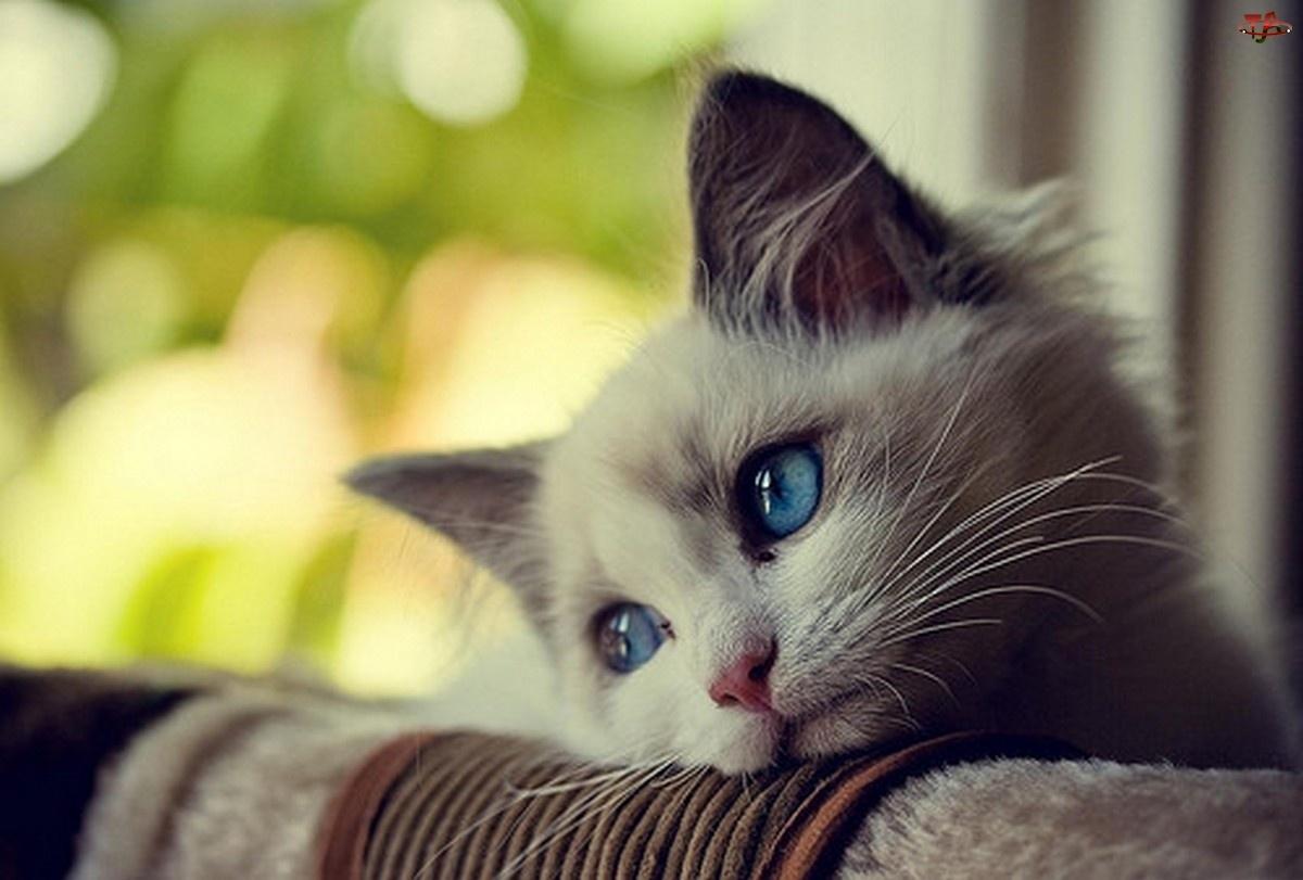 ¿Sientes el amor de los gatos?