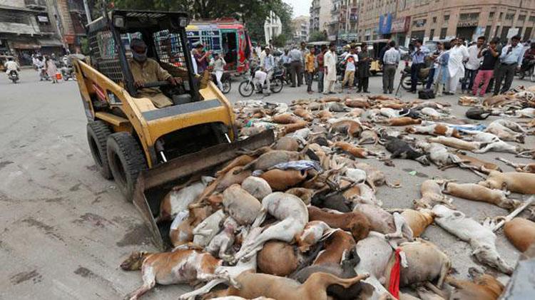 Matanza de perros en Pakistán: ¡ponte en acción!