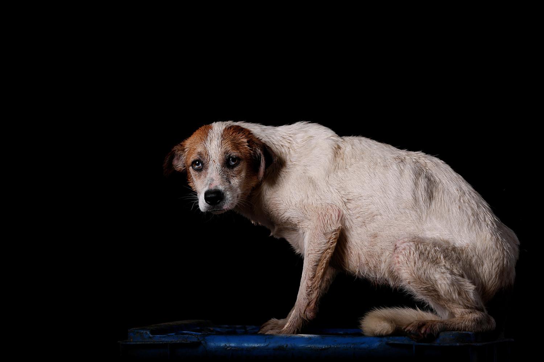 Los animales de Venezuela te necesitan más que nunca