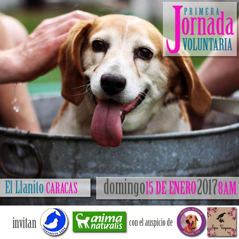 Caracas: ¡Apúntate en la  primera Jornada Voluntaria!