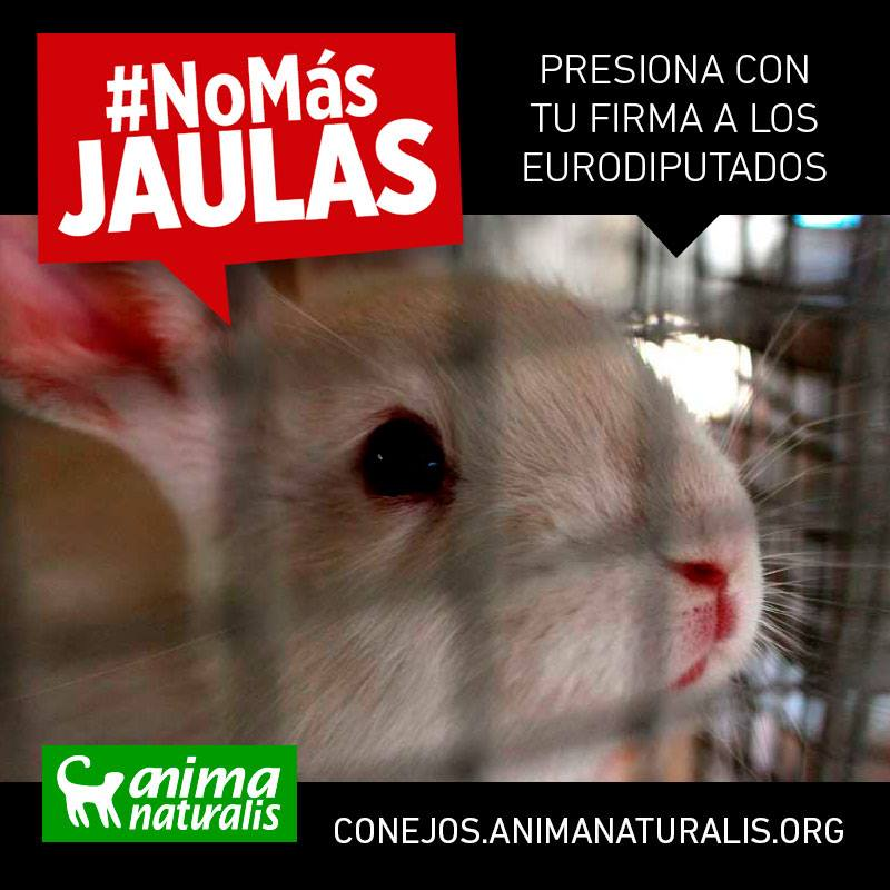 Los conejos te necesitan: ¡No más jaulas!