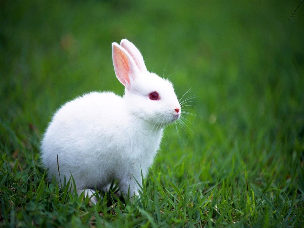 ¡Buenas noticias para los conejos de Europa!