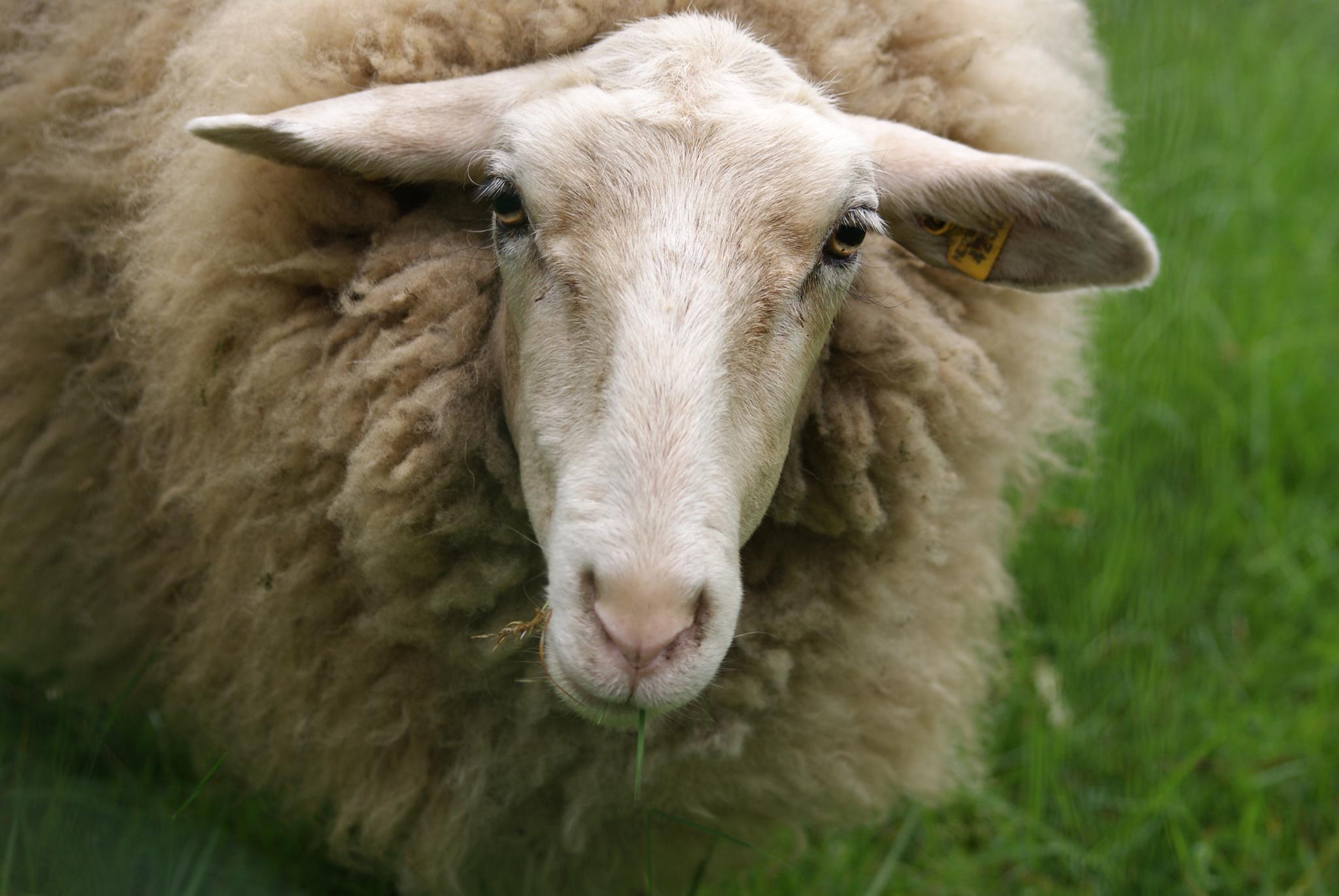 Diez razones para apoyar los derechos animales y su explicación