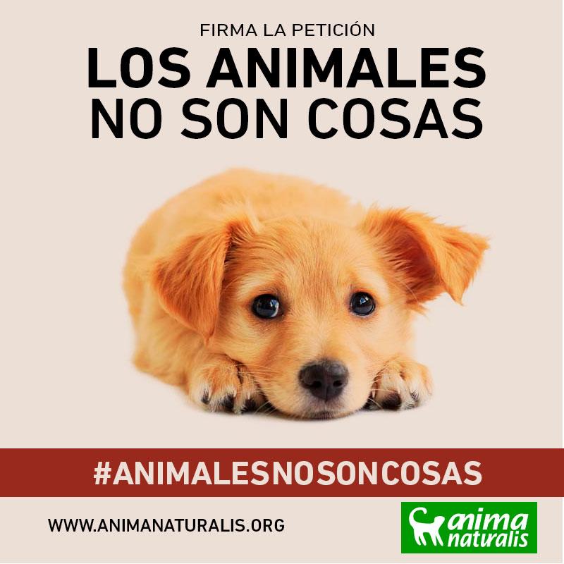 Los animales no son cosas ¡Actúa!