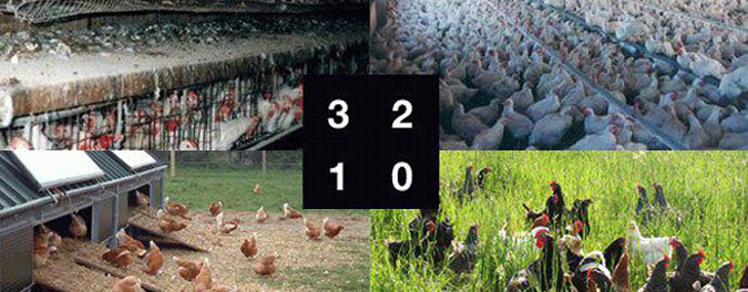 Numeración de los huevos