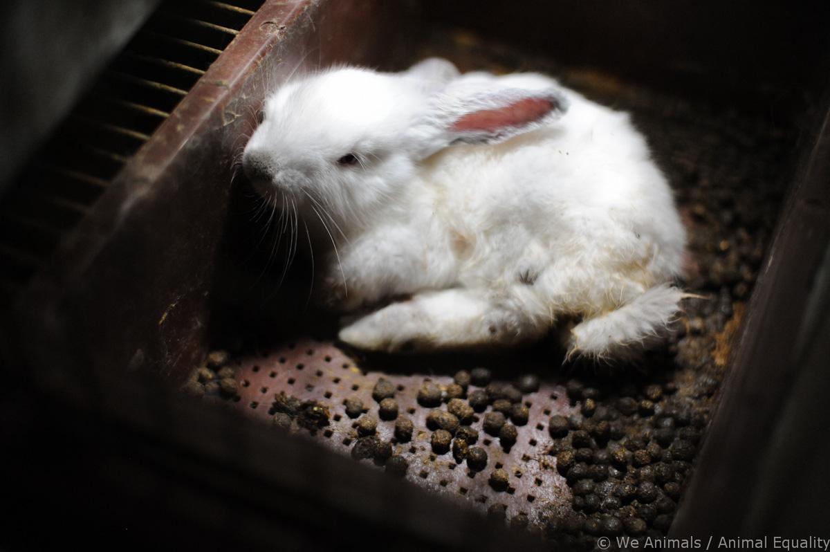 ¡Actúa! Es hora de hacer historia por los conejos