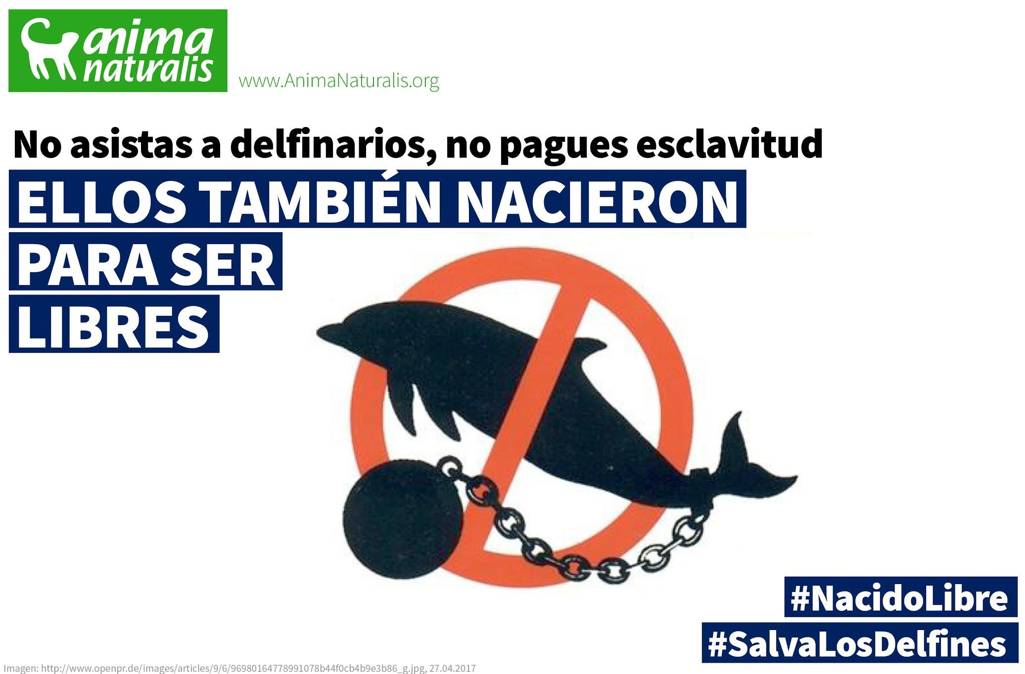 Aprueban prohibir los delfinarios en México... ¡En 2067 o más tarde!