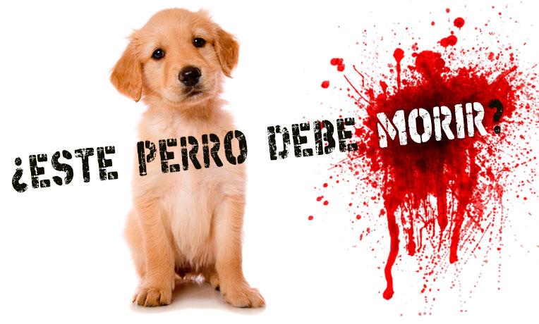 ¡Salva la vida de los animales de los antirrábicos!  ¡Firma por un #SacrificioCero!