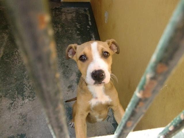 AnimaNaturalis exige a Cort la creación de una oficina de protección animal