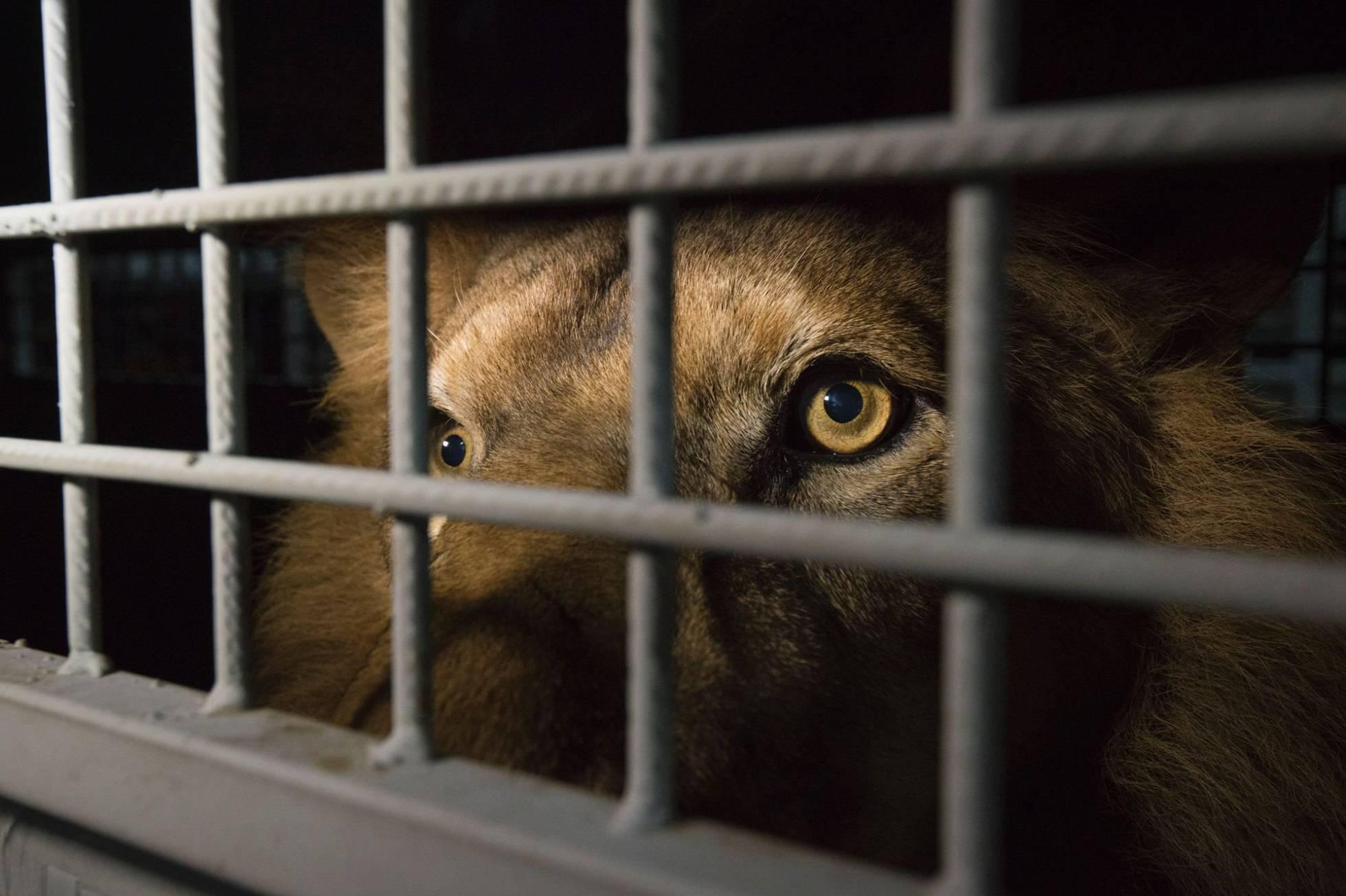 Aragón prohibirá el uso de animales salvajes en circos