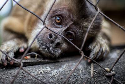 Mercado ilegal de fauna silvestre prolifera en Maracaibo