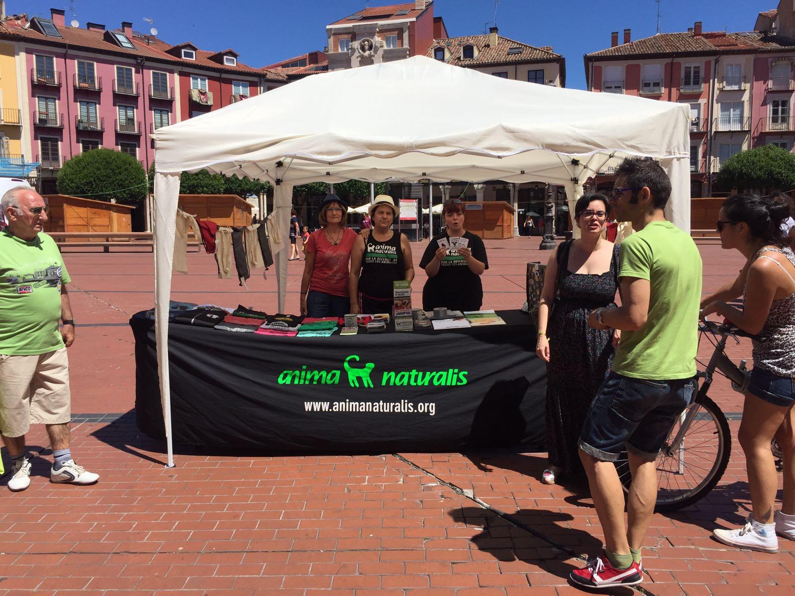 Activismo bajo el sol castellano