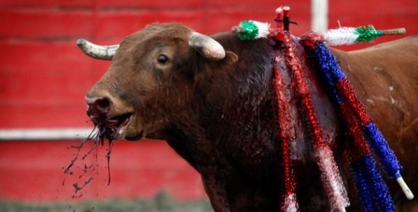 Baleares: Un nuevo horizonte de esperanzas y lucha contra la tauromaquia