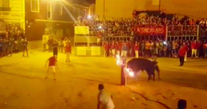 Toro muere súbitamente al golpearse contra un pilón en Foios