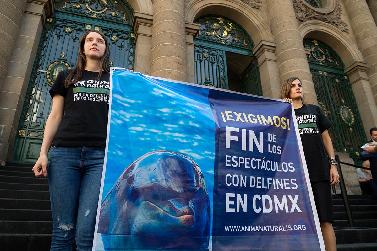 Ciudad de México pone fin a los espectáculos con delfines por unanimidad