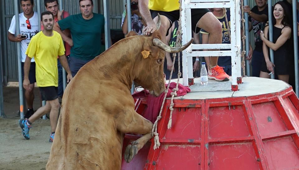 AnimaNaturalis denuncia la presunta muerte de un 'bou' en las fiestas en Deltebre