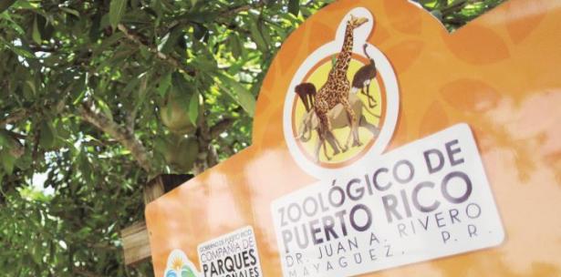 Recomiendan enviar animales del zoológico de Mayagüez a santuarios de EEUU
