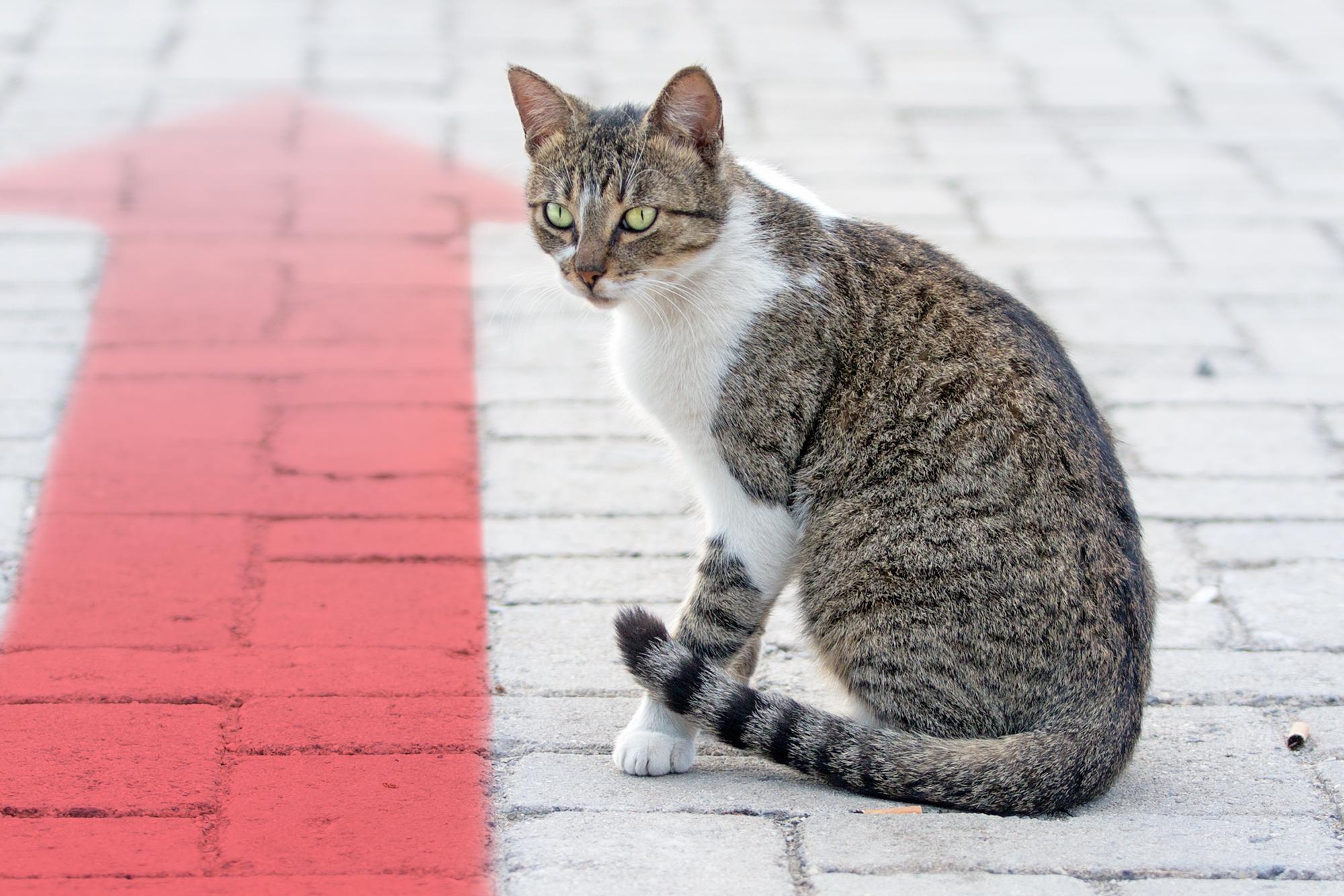 ¿Qué pasa con los gatos del Centro Médico Nacional Siglo XXI?