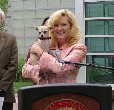 """California prohíbe venta de animales en tiendas de """"mascotas"""""""