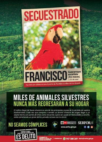 Tráfico de fauna silvestre en Perú: el 80% del comercio ilegal se concentra en los mercados