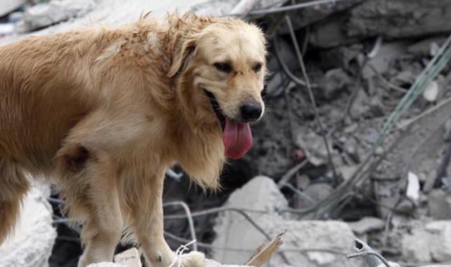 Las víctimas no humanas de los terremotos en México