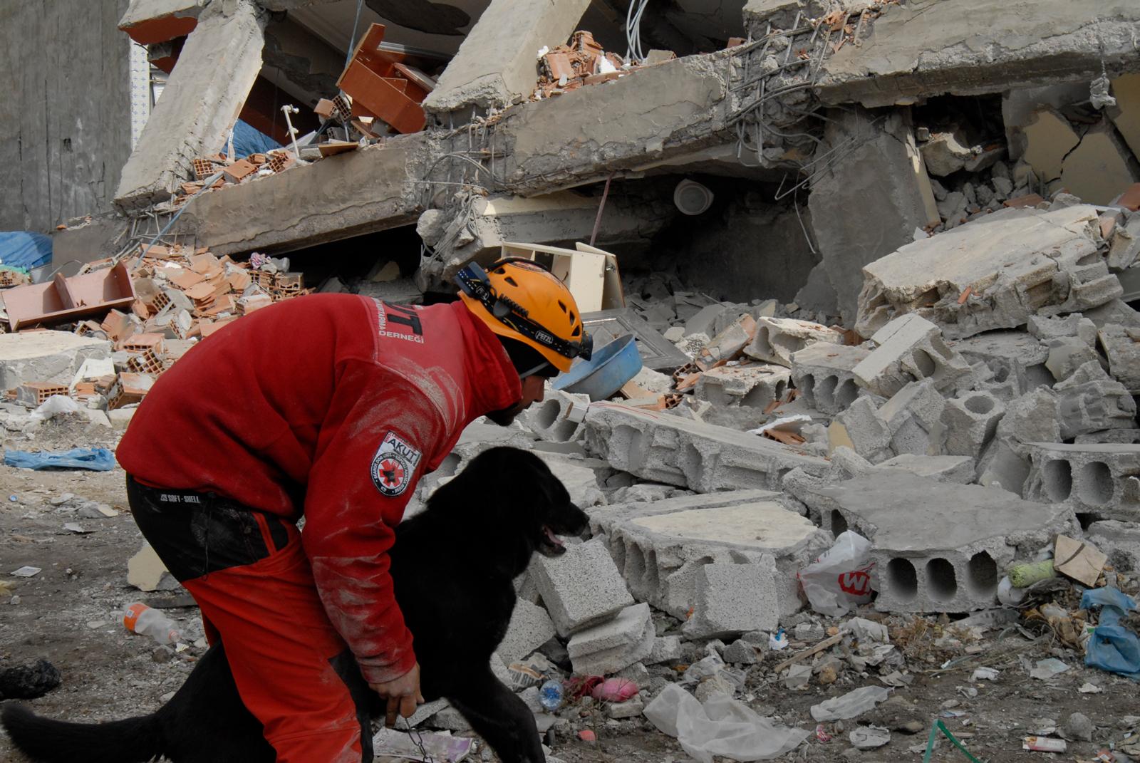 La heroica y delicada situación de los animales en catástrofes