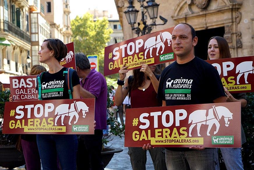 AnimaNaturalis lanza campaña 'Stop Galeras' contra la explotación de caballos
